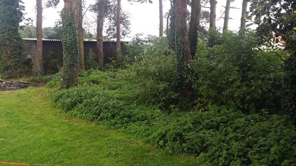 Landscaping-work-in-Cromer-10