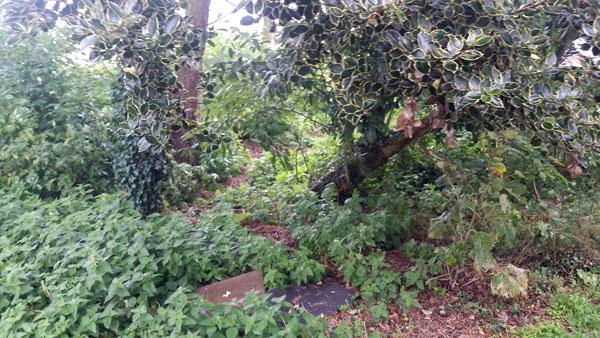 Landscaping-work-in-Cromer-9